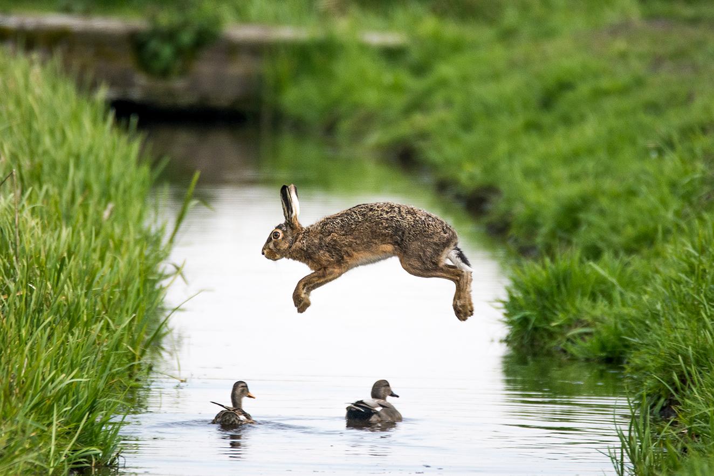 Doe mee aan de WWF-Frans Lanting Photo Award!